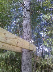 Tree House Plans For Two Trees how to build a treehouse- phase one: picking & prepping the trees